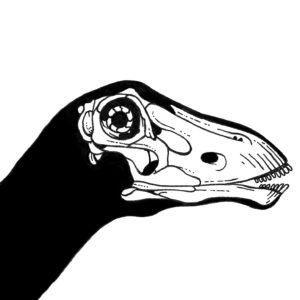 Drawing of a dinosaur skull