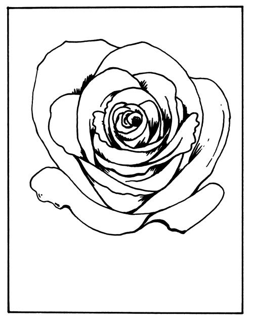Rose. In Czech, růže.